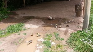Cusco Camp