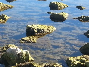 Lago Musters