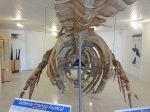 Ein Wal