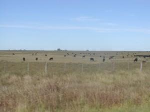 Weideflächen