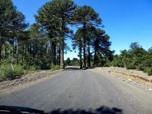 Nationalpark Villarrica arg.