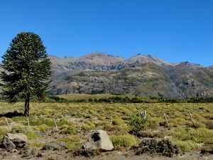 INationalpark Villarrica arg.