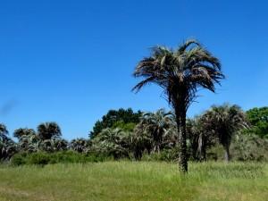 El Palmar in Uruguay