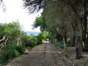 Colalao del Valle - Fiambalá_20