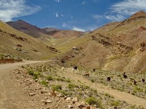Cachí - Paso Abra Blancö RN 51_068