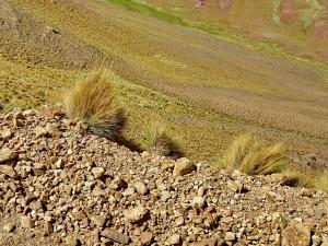Cachí - Paso Abra Blancö RN 51_092