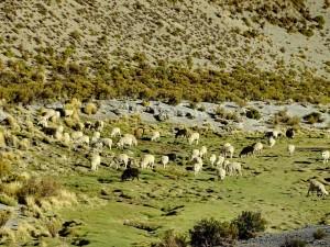 Cachí - Paso Abra Blancö RN 51_112