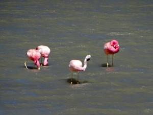 Chaschuil-Laguna Verde-La Gruta_47