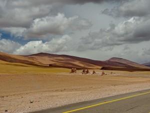 bis San Pedro de Atacama_13