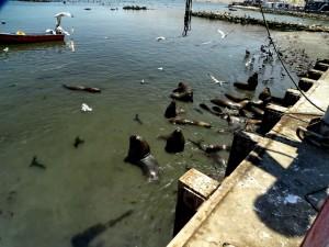 Fischereihafen_17