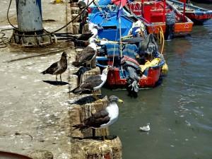 Fischereihafen_34