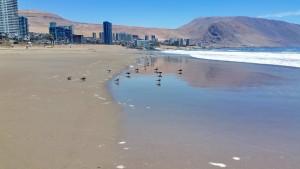 Playa Brava_03