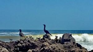 Playa Brava_25