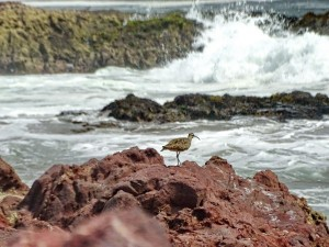 Playa Brava_33